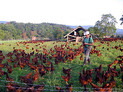 Joel Salatin at Polyface